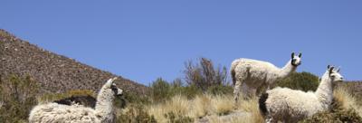 玻利维亚科恰班巴酒店图片