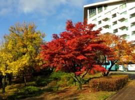 束草市酒店图片_1
